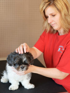 Therapeutic Canine Massage has 10 benefits for your dog